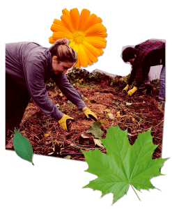 collage of tgw gardening as they volunteer for food link